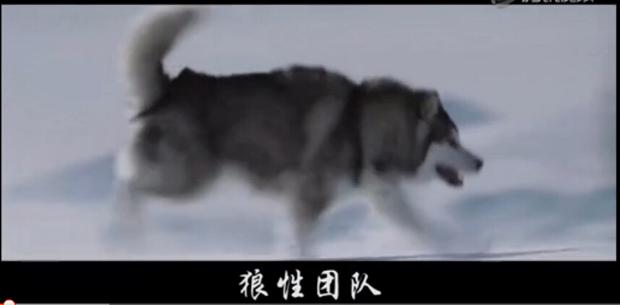 www.lzttk.com 励志短片 狼性团队